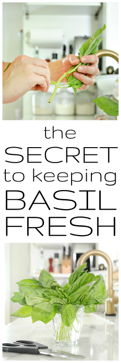 how to keep basil fresh for weeks